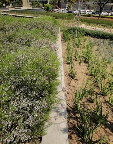 Gardens and i brooklyn bridge pretoria for Insite landscape architects